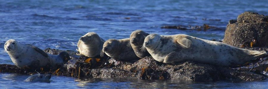 Farne Island Seals - Header