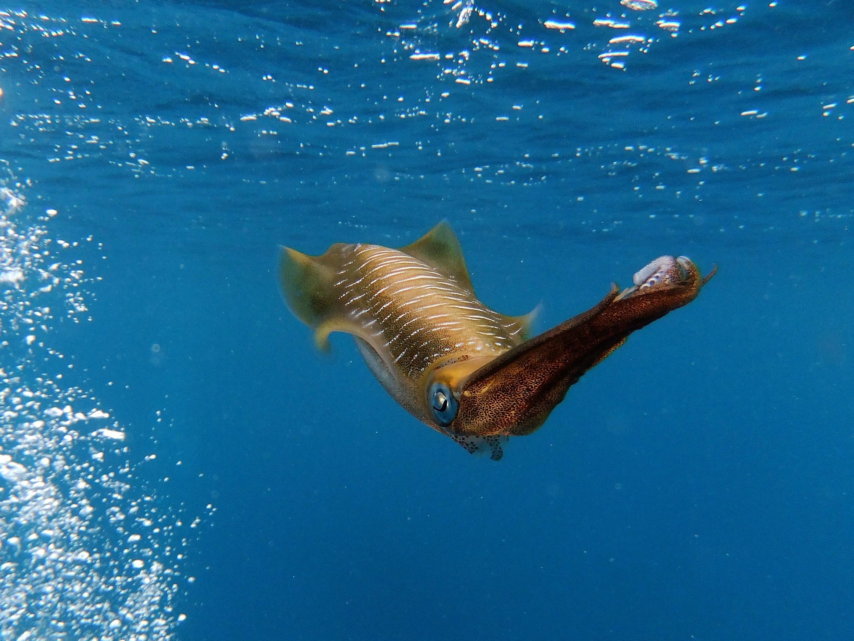 """Cuttlefish"" by Sarah Turpin"
